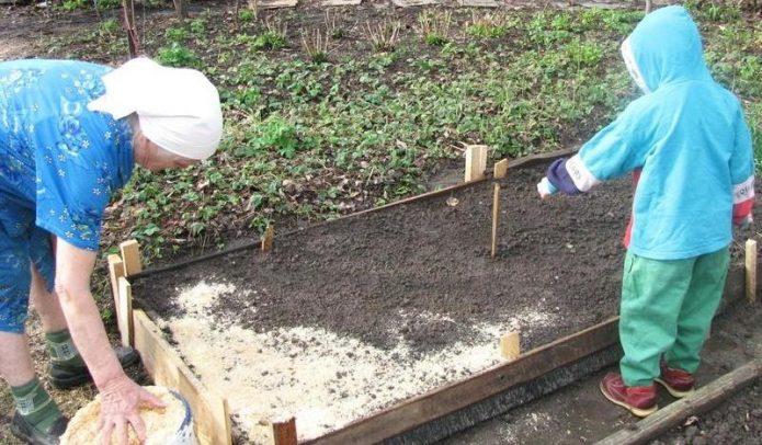 Подготовка грядки для моркови весной