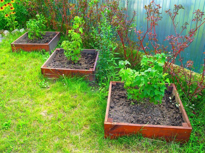 Как правильно рассадить смородину осенью
