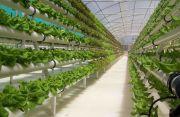 Продажа зелени как бизнес