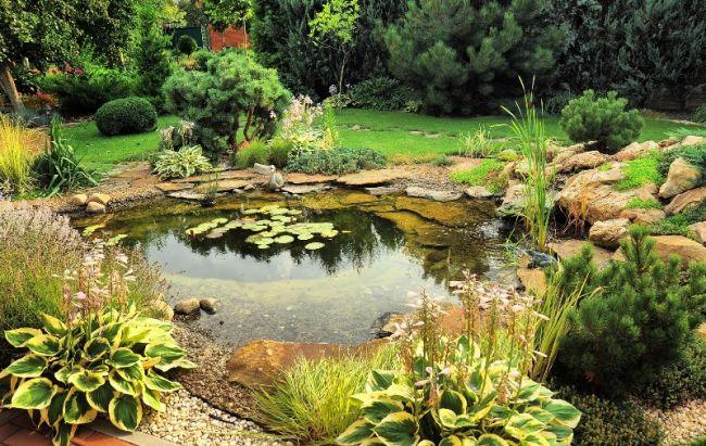 Растения в пруду будут препятствовать нагреванию воды и ее испарению, зарастанию водоемов тиной и водорослями
