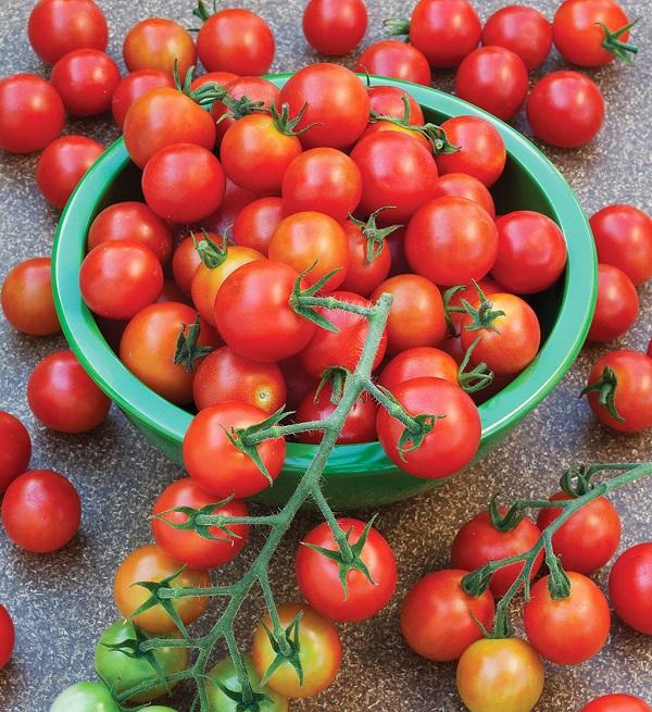 Помидор «рапунцель» является новым видом томата, который будет доступен в свободной продаже очень скоро