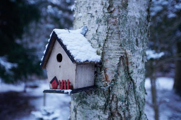 Нельзя забывать и про птиц, которые помогают защищать растения от насекомых