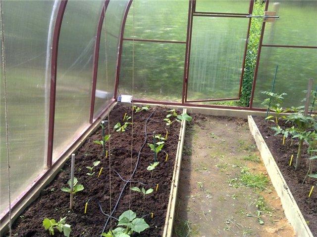 При использовании такого метода полива достигается оптимальное соотношение кислорода и влаги в почве