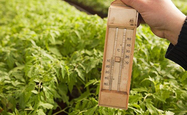 При помощи регулировки аппарата настраивается средняя температура, которая будет оптимальной для растений в парнике