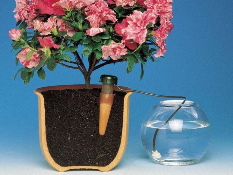 Чтобы цветы не погибли, нужно обеспечить все оптимальные условия, в том числе и полив
