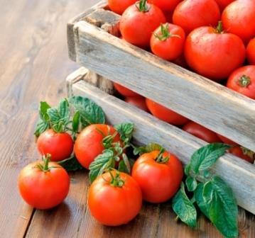 Получить хороший урожай помидоров - это огромный труд и большая работа