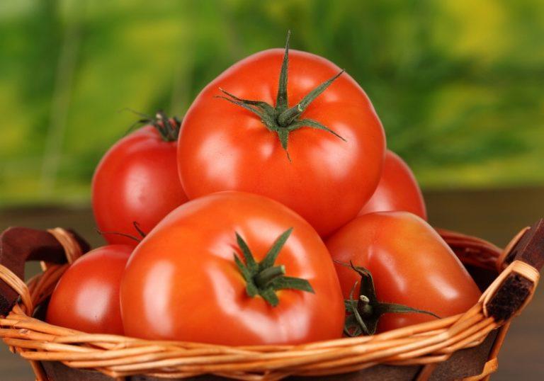 При соблюдении мер профилактики можно ожидать обильный урожай без особых потерь