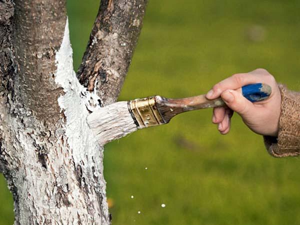 В апреле рекомендуется обезопасить деревья от вредителей