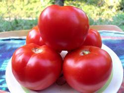 """Томат """"Красным красно"""" - это гибридный вариант, особенные признаки которого еще не закреплены должным образом в его генотипе"""