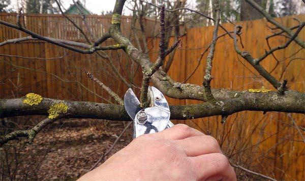 В апреле необходимо сформировать кроны у деревьев