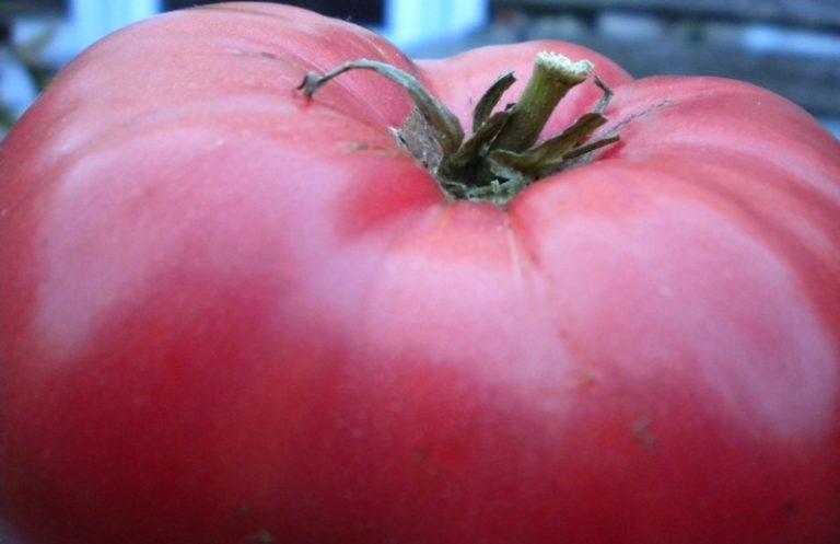 Крупные овощи имеют круглую, немного приплюснутую форму, средний вес плода - 350 г.
