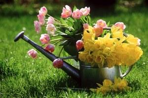 В июле все растения на дачном участке начинают активно цвести