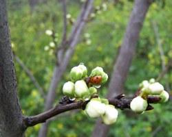 Середина весны – время первого визита на дачу