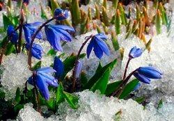 В марте весна уже заявляет о себе