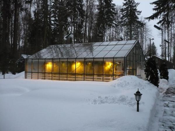 В январе на даче можно осуществлять работы по посеву культур в зимней теплице