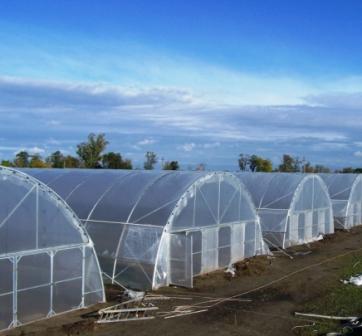 Фермерские теплицы предназначены для массового выращивания сельхозпродукции