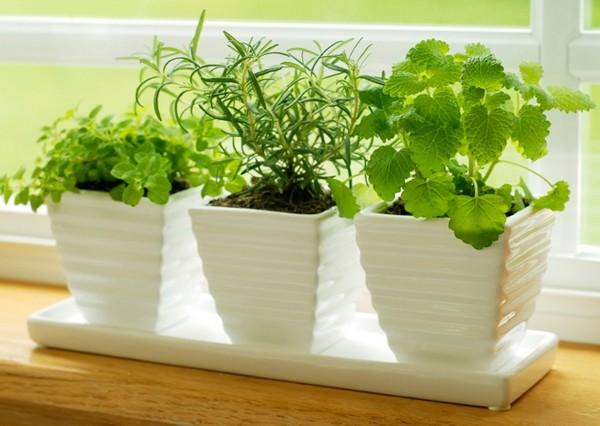 В феврале сеют зеленные культуры для выращивания дома на подоконниках