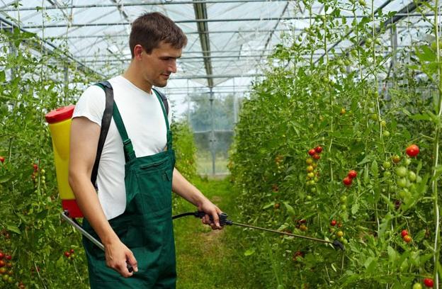 Для профилактики болезни необходимо не допускать вышеуказанных условий. Не помешает и периодическая обработка помидоров