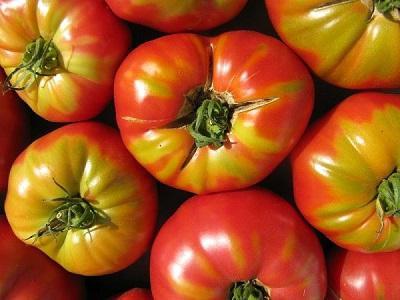 Данное средство, как говорят отзывы садоводов и огородников, помогает томатам не только бороться с фитофторой, но и с другими опасными заболеваниями
