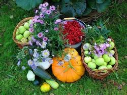 В августе на огороде необходимо продолжить сбор урожая