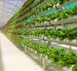 Гидропоника является технологией, которая позволяет выращивать растения без земли