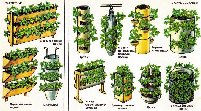 В реальности голландский метод предполагал использование мешков и прежде. Сейчас все больше хозяйств выращивают клубнику в многоразовых горизонтальных контейнерах