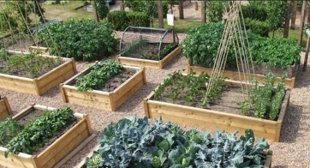 Грядки из досок - не только красивое обрамление для будущего урожая, но и полезное изобретение