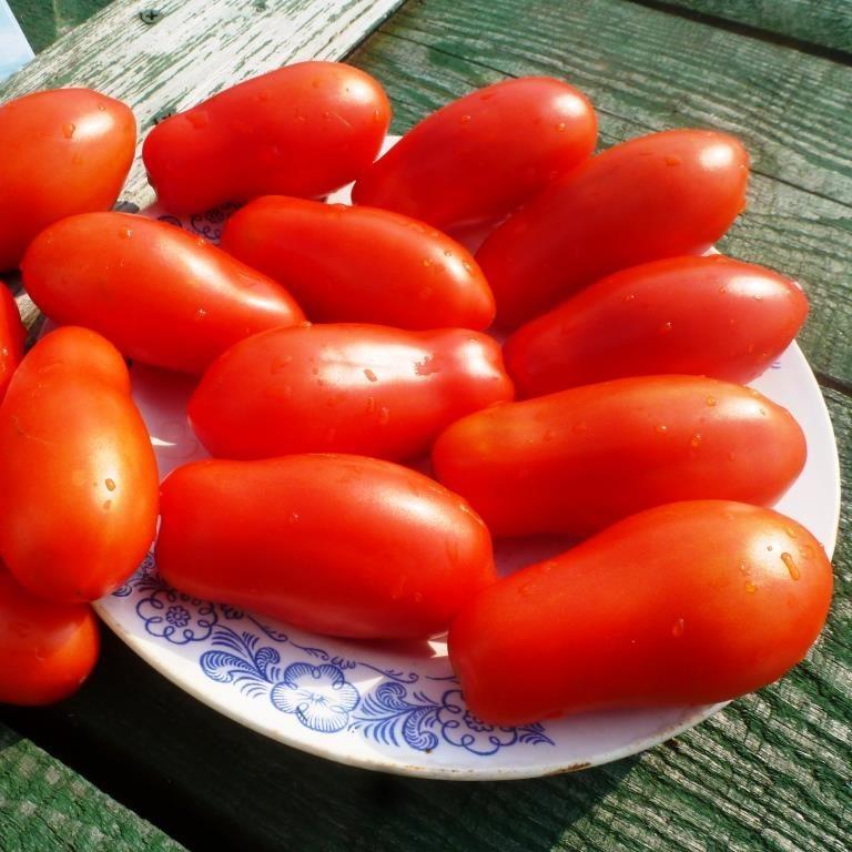 помидоры дамские пальчики рецепт с фото
