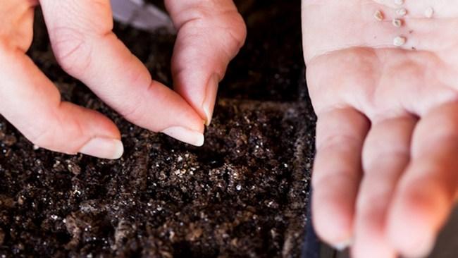 В марте осуществляются посев овощной рассады