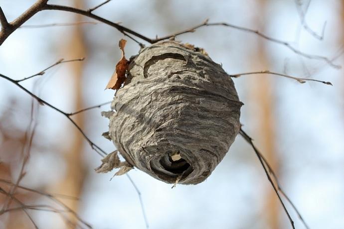 Устранение улья — это непростая задача для новичка и лучше всего доверить это действие опытному пчеловоду