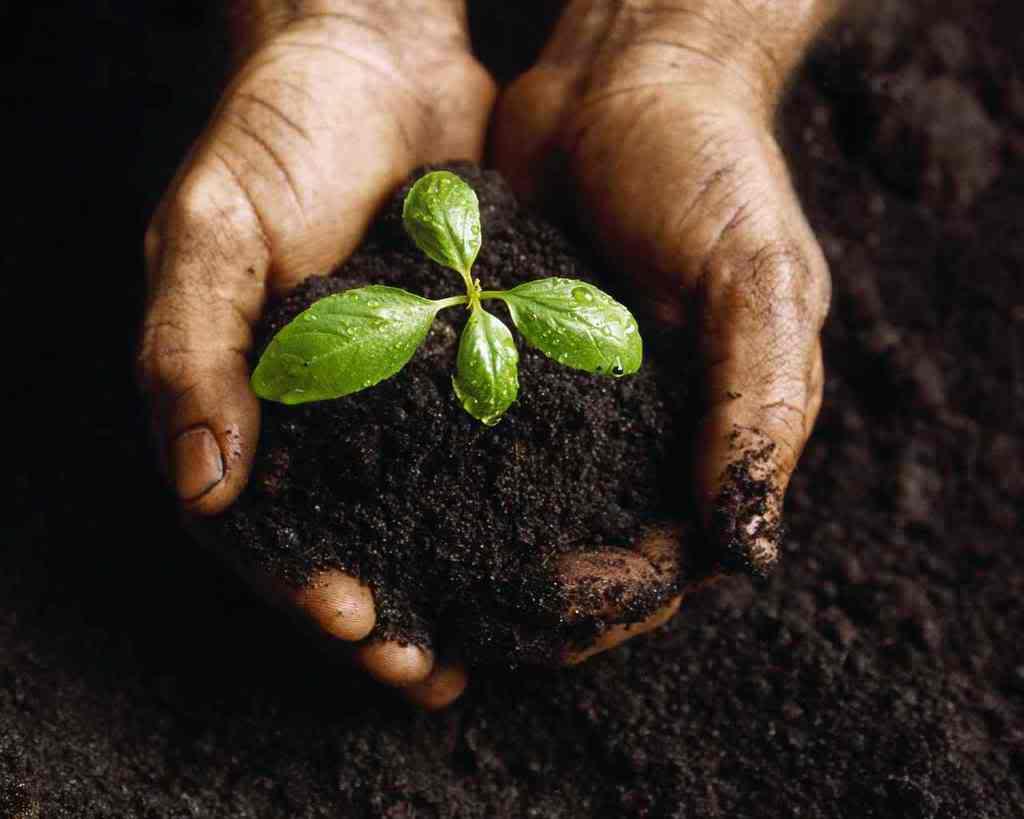 Вариантов подкормки растений в теплице существует несколько