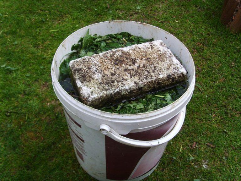 Впервые вносить удобрения в почву можно через 2 недели после появления первого листочка