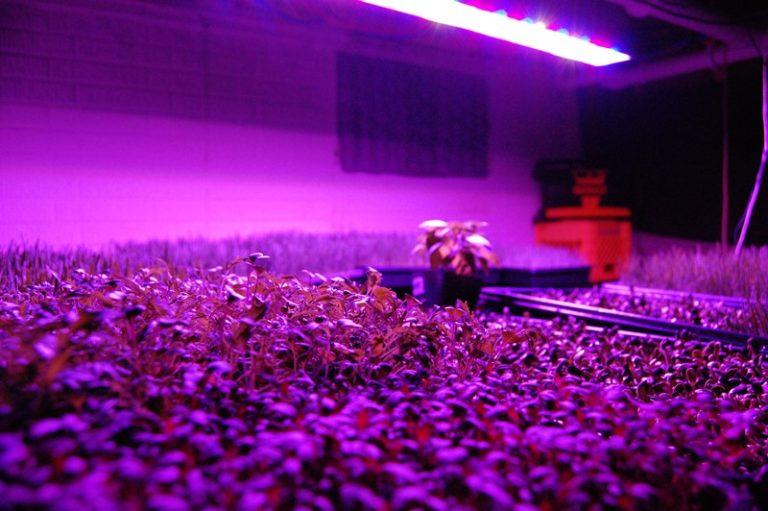 Довольно часто в теплицах также устанавливают инфракрасные лампы, которые направленно прогревают грунт или само растение
