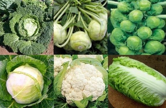 Из каждого представителя этого витаминного овоща можно сделать отдельное блюдо, поэтому капуста любима во многих семьях