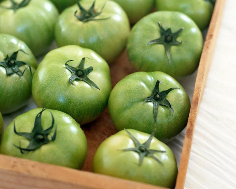 Можно собирать и зеленые плоды помидоров