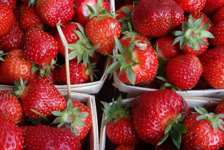 Как организовать бизнес по выращиванию клубники в теплице круглый год?