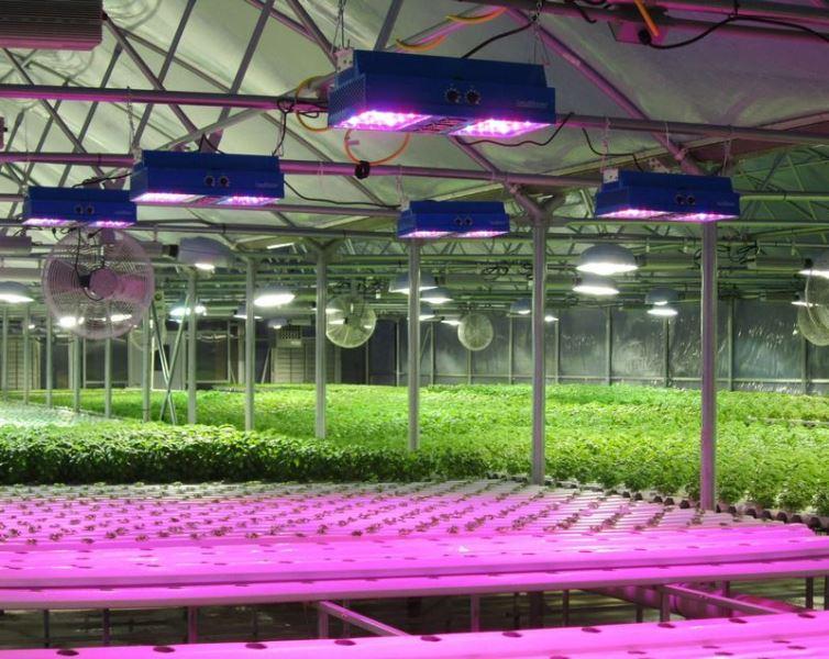 Освещение теплицы — очень важный этап в формировании нормальных условий для роста и размножения растений