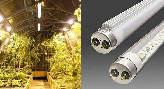 Искусственное освещение теплиц можно осуществлять, используя люминесцентные лампы