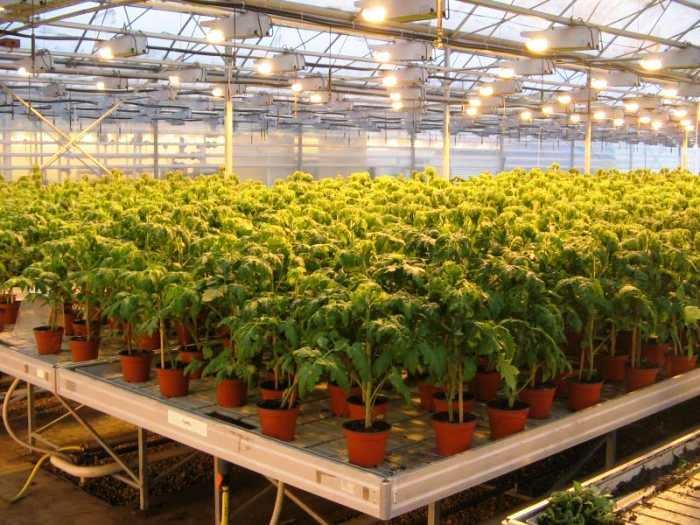 Количество света нужно выбирать с учетом потребности растения
