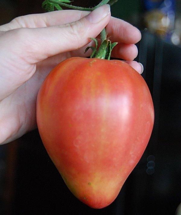 расные или красно-малиновые помидоры имеют сердцевидный внешний вид