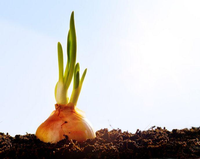 Каждый год с приходом весны все живое начинает просыпаться после зимнего периода