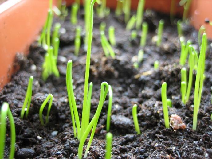 Подготовка овощей к посадке в огород может начинаться с рассады