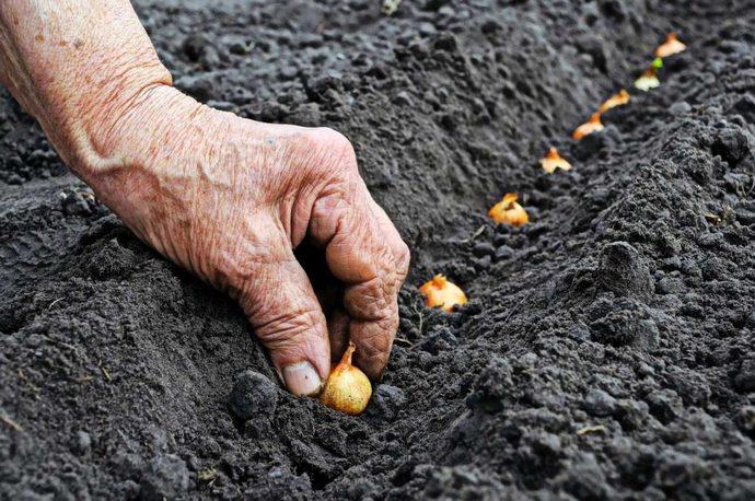 Лунный календарь садовода 2011 года