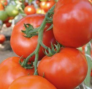 Индетерминантный томат Махитос f1