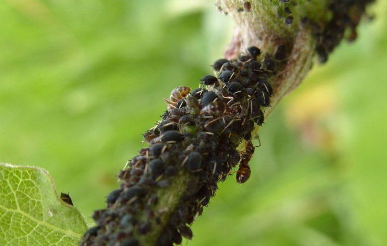 Дезинфекция проводится раствором медного купороса