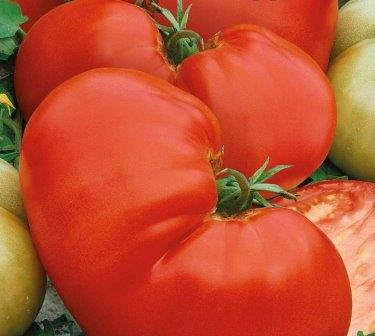 Употреблять Медвежью лапу приятнее всего в свежем виде, томат хорош на вкус, ароматен