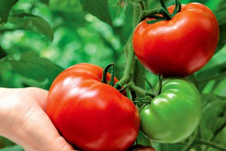 Множество сортов с июня по август дают ароматные плоды самых разных цветов и размеров