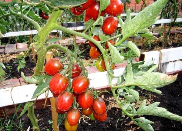 Нехватку калия можно заметить по внешнему виду плодов