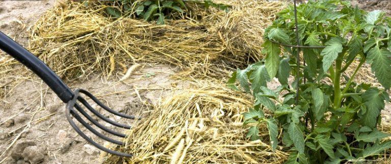 В результате такого агроприема создаются предпосылки для развития полезной микрофлоры и накопления питательных веществ в почве
