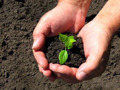 Обеззараживание почвы и обработка теплицы являются необходимыми составляющими получения хорошего урожая в теплице